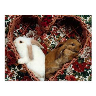 carte postale 12 de lapin