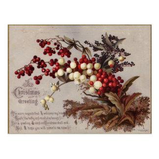 Carte Postale 1882 : Baies traditionnelles de houx