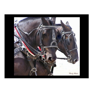 Carte postale #1 de chevaux de trait