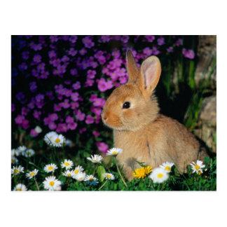carte postale 2 de lapin