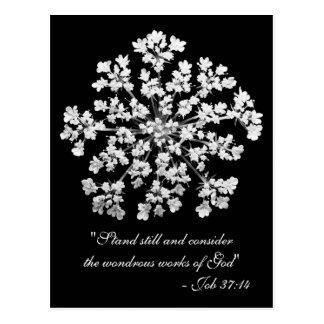 Carte Postale 37:14 du travail de dentelle de la Reine Anne