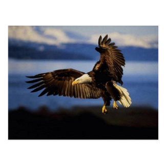 Carte postale 38 d'Eagle