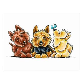 Carte Postale 3 terriers australiens