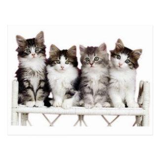 Carte Postale 4 kittiens sur un banc