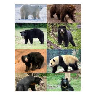 Carte Postale 8 ours du monde
