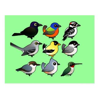 Carte Postale 9 oiseaux du sud-est de jardin des Etats-Unis