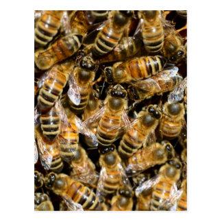 Carte Postale Abeilles de miel