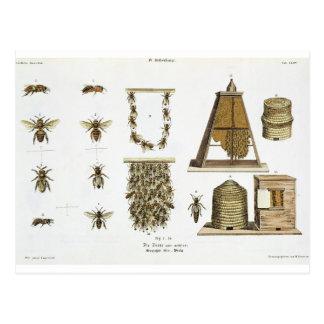 """Carte Postale Abeilles et apiculture, """"du jeune terrien"""", p"""