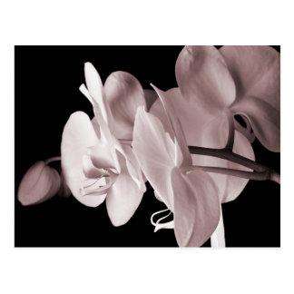 Carte Postale Abrégé sur blanc arrière - plan de noir de fleur