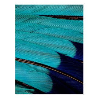 Carte Postale Abrégé sur indien plume de rouleau