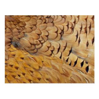 Carte Postale Abrégé sur plume de faisan de Brown