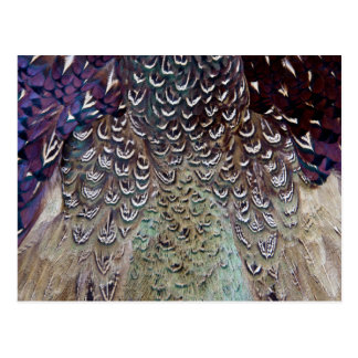 Carte Postale Abrégé sur plume de faisan de Melanistic