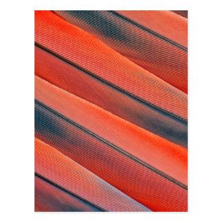 Carte Postale Abrégé sur rouge plume d'ara