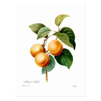 Carte Postale Abricot