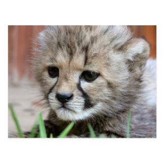 Carte postale adorable de guépard de bébé