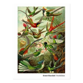 Carte Postale Adresse de colibris de Trochilidae d'Ernst Haeckel