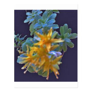 Carte Postale Aeonium de floraison