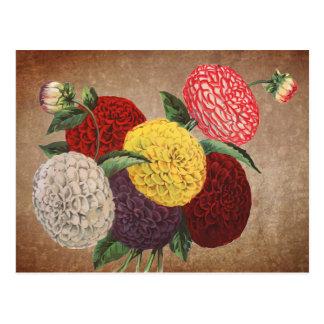 Carte Postale Affichage vintage de chrysanthème de style
