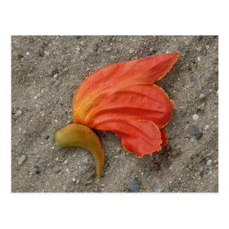 Carte postale africaine de fleur d'arbre de tulipe