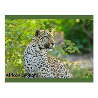 Carte postale africaine de léopard