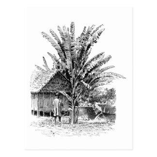 Carte Postale Agriculteur de banane au Madagascar