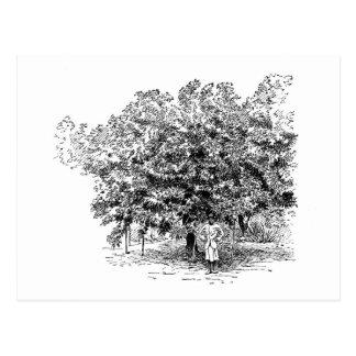 Carte Postale Agriculteur de mangue