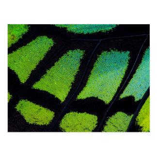 Carte Postale Aile de papillon de vert et de noir de chaux