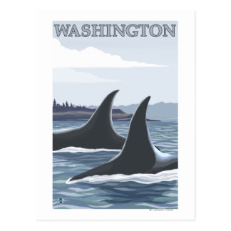 Carte Postale Ailerons de WashingtonOrca