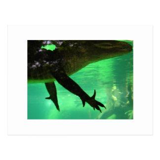 Carte Postale Alligator