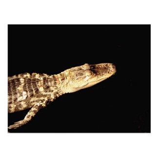 Carte Postale Alligator #2