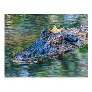 Carte Postale Alligator avec une couronne
