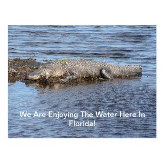 Carte Postale Alligator d'alligator