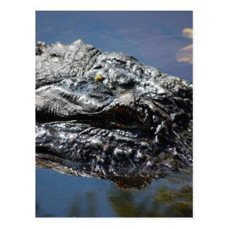 Carte Postale Alligator de la Caroline du Nord