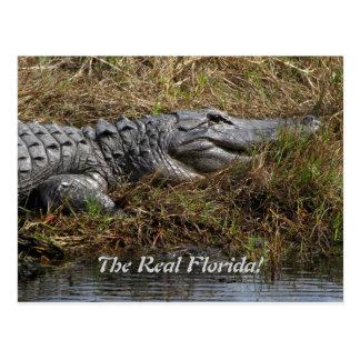 Carte Postale Alligator de la Floride