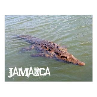Carte Postale Alligator de la Jamaïque