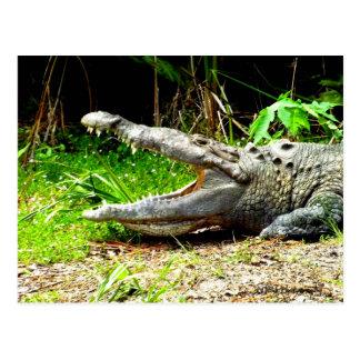 Carte Postale Alligator géant avec sa bouche ouverte
