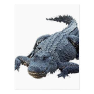 Carte Postale Alligator réaliste