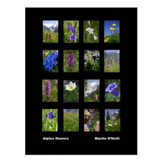 Carte postale alpine de fleurs