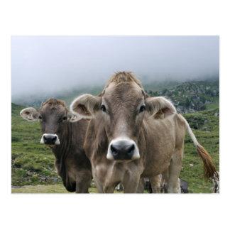 Carte postale alpine de vaches