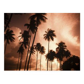 Carte Postale Ambre gris Caye, Belize, Amérique Centrale. 2