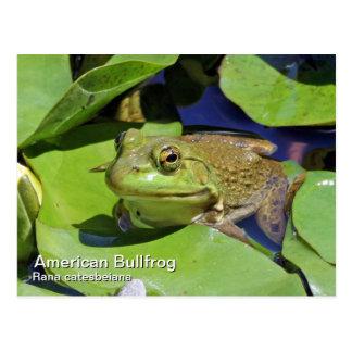 Carte postale américaine de grenouille mugissante