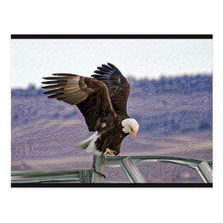 Carte postale américaine d'Eagle chauve