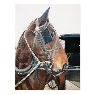 Carte postale amish de cheval