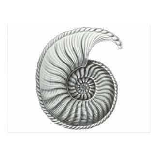 Carte Postale Ammonite