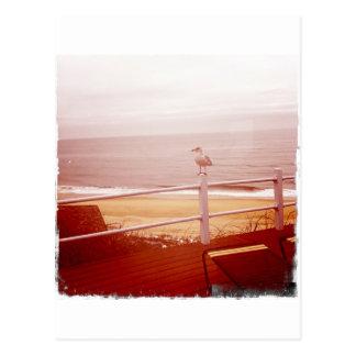 Carte Postale Amour 3,0 de mouette de Montauk