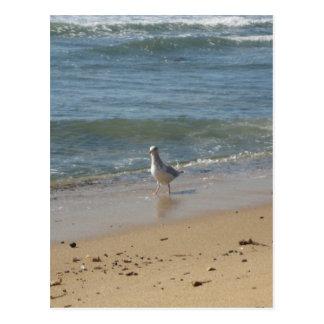 Carte Postale Amour de mouette de plage de Montauk
