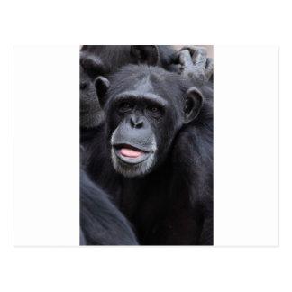 Carte Postale Amusement de chimpanzé