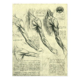 Carte Postale Anatomie de bras et d'épaule par Leonardo da Vinci