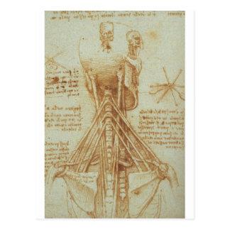 Carte Postale Anatomie du cou par Leonardo da Vinci C. 1515