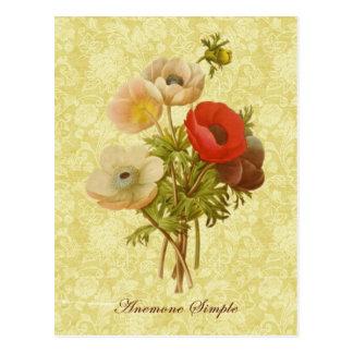 Carte Postale Anémone antique botanique